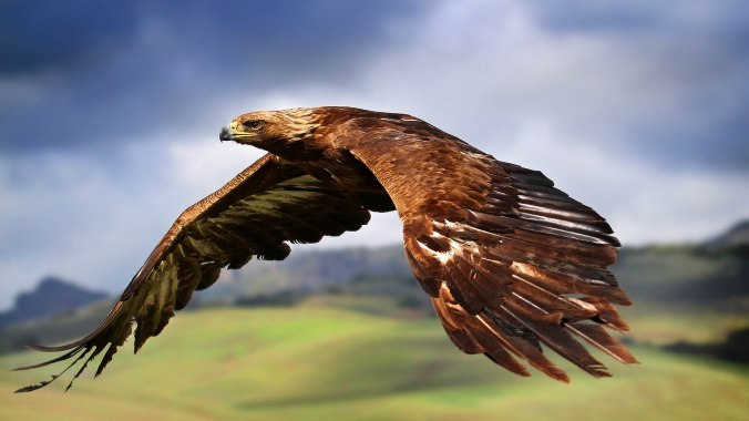 eagle-in-flight-wallpaper-hd-