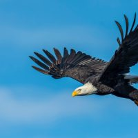 Eagle Sightings 1-9 and God's Words for this Season